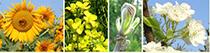 Növénynemesítők